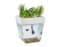 Набор для выращивания растений и ухода за рыбкой «Акваферма» (арт. 607701)